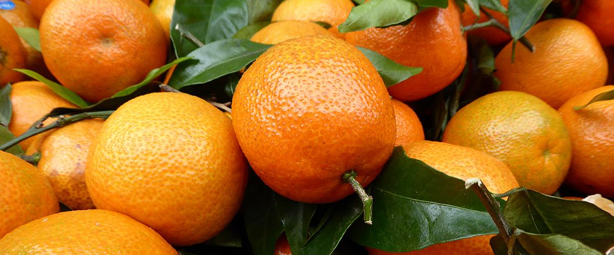 Kutschkermarkt: Frische Mandarinen